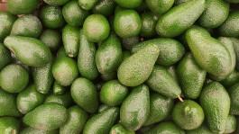 В Калининградскую область не пустили партию авокадо из Литвы