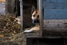 Мужчине грозит до трёх лет тюрьмы за убийство собаки на Куршской косе