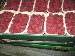 В Калининградской области уничтожили 10,5 тонн санкционных овощей и фруктов