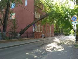 На ул. Вагнера в Калининграде дерево повисло на электропроводах над дорогой