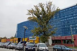 «Три вместо одного»: в Калининграде выбрали рисунки, которыми украсят дома в музейном квартале