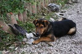 На время ЧМ-2018 в Калининграде отловили 150 бездомных собак