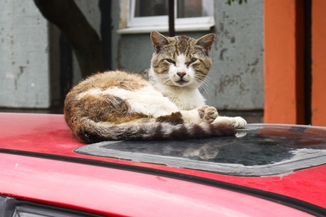 фото    В Калининграде мужчина сбросил мусор на машину, по которой кошки забирались к нему на балкон