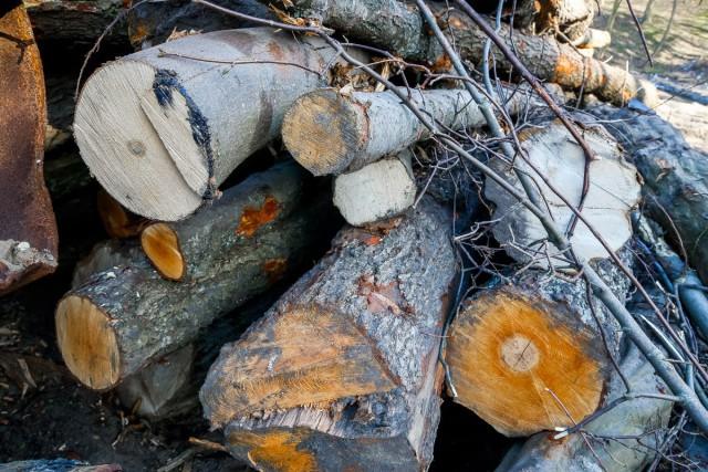 В районе улицы Горького в Калининграде вырубят 120 деревьев под строительство делового центра
