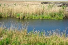 В озере на окраине Калининграда нашли труп женщины