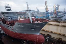 Завод «Янтарь» заявил о проблемах со строительством рыболовецких траулеров для Камчатки из-за санкций