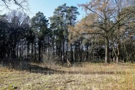Алиханов предложил обрабатывать леса в Калининградской области из-за «огромного количества» клещей