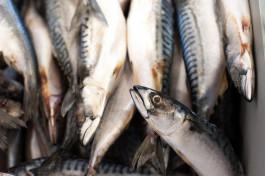 Двоим жителям Краснознаменска грозит тюремный срок за ловлю рыбы сетью