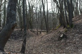 В Полесском округе обнаружили в лесу обгоревший труп мужчины