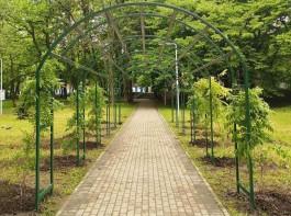 В Южном парке в Калининграде установили 12-метровую перголу с глициниями