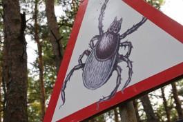 За неделю в Калининградской области 325 человек пострадали от укусов клещей