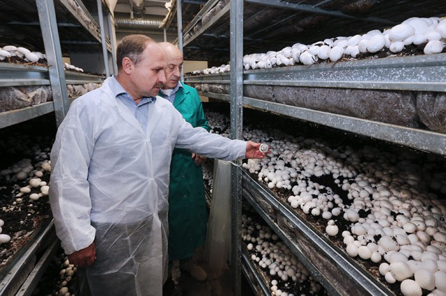 Мыпланируем сделать вБагратионовском районе грибной кластер— Сергей Лютаревич