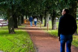 В Калининграде направляют 6,4 млн рублей на уход за каштанами и елями