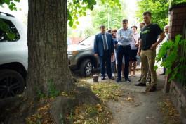 «Тротуарные войны»: как мэр Калининграда спорил с горожанами о вырубке деревьев