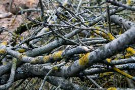 Для строительства школы на улице Левитана планируют вырубить 240 деревьев