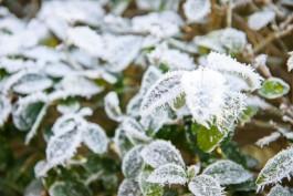МЧС: В четверг и пятницу в Калининградской области ожидаются ночные заморозки до -2°С