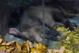 Калининградский зоопарк просит помочь с деньгами на корм для животных