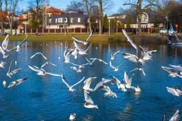 «Животные жаждут любви, гамамелис чудит»: как «розовая зима» влияет на Калининградскую область