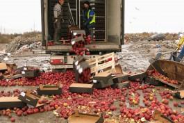 За год калининградские таможенники уничтожили более 16 тонн санкционных продуктов
