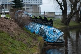 На берегу Нижнего озера в Калининграде установили гигантскую рыбу