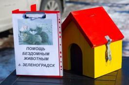 В Зеленоградске выберут лучший домик для котов