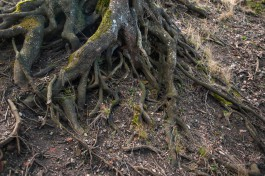 В Зеленоградском округе нашли тело 79-летнего грибника, пропавшего осенью