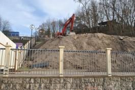 По факту вырубки деревьев у будущего апарт-отеля в Светлогорске возбудили уголовное дело