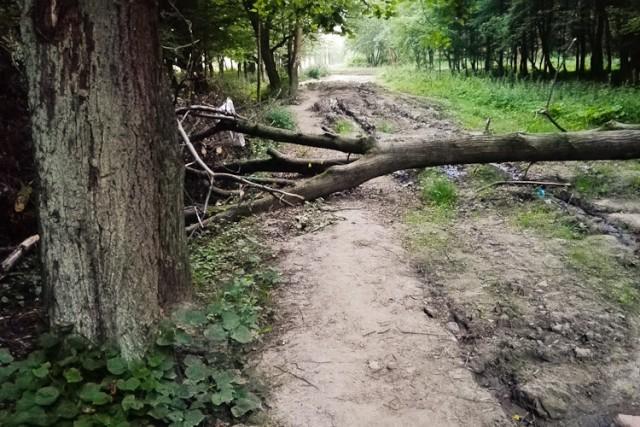 Шторм обесточил 662 дома вКалининградской области