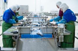 «Четыре миллиона банок»: как Алиханов посещал рыбоконсервный завод в Пионерском