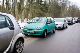 На Куршской косе будут выборочно проверять автомобили в поисках срубленных елей