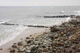 В предварительных пробах рыбы в Балтийском море нашли следы утечки химического оружия
