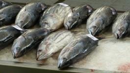 В Калининградскую область не пустили 28 тонн тунца бонито из Мавритании