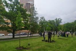 На улице Куйбышева в Калининграде высаживают 75 каштанов и лип