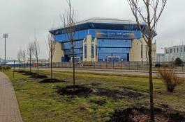 Около спорткомплекса «Янтарный» в Калининграде высадили 75 сакур