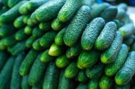 Экспорт овощей из России в страны ЕАЭС вырос на 51,8%