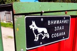 Жительница Калининграда подала в суд на владельца немецкой овчарки из-за гибели шпица
