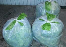 Житель Советска пытался ввезти в регион 213 кг польских овощей