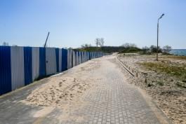 «Удержать песок»: на озеленение авандюны в Зеленоградске выделят 20 млн рублей