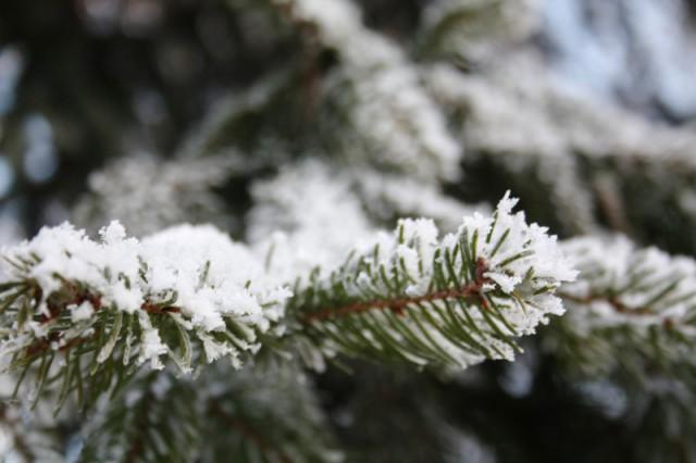 Синоптики поведали опогоде доконца недели— Надвигается потепление