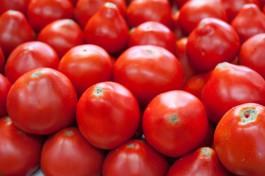В Калининградской области в помидорах из Марокко нашли томатную моль