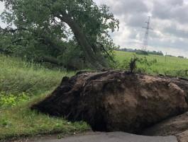 За четыре часа шторма на областных трассах ветром повалило 84 дерева