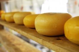 В Калининградской области пройдёт сырный фестиваль «Тильзитер»