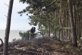На Куршской косе произошёл пожар: выгорело 70 «квадратов» леса