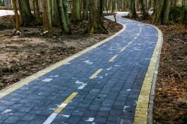 Продолжение велодорожки вдоль побережья до Балтийской косы оценили в 763 млн рублей