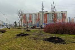Исследование: Калининград стал безусловным лидером по росту цен на квартиры в России