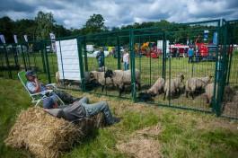 В Калининградской области старшего сержанта осудили за кражу овец с пастбища