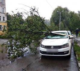 В Калининграде два дерева упали на «Фольксваген» и «Пежо»