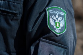 В региональном управлении Россельхознадзора сменился руководитель