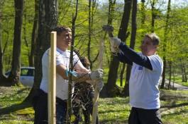 В октябре в Калининградской области планируют высадить 470 тысяч деревьев