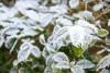 Синоптики прогнозируют заморозки и снег в Калининградской области